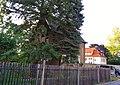 An der Gottleuba, Pirna 123963716.jpg