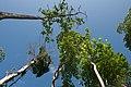 Andaman Islands, Blue sky, Canopy of trees.jpg