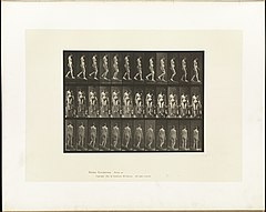 Animal locomotion. Plate 117 (Boston Public Library).jpg