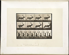 Animal locomotion. Plate 695 (Boston Public Library).jpg
