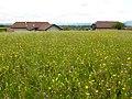 Annecy-le-Vieux (50841084372).jpg