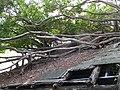 Anping Tree House 安平樹屋 - panoramio.jpg