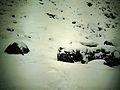Apollontempel am Hundstalsee zu Baubeginn im Winter.JPG