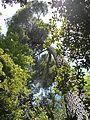 Arboretum Trsteno 11.jpg