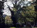 Arboretum Zürich 2014-04-23 18-24-42 (P7700).JPG