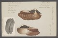 Arca noe - - Print - Iconographia Zoologica - Special Collections University of Amsterdam - UBAINV0274 076 04 0005.tif
