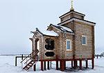 Arkticheskiy trilistnik (2016-04-18) 10.jpg