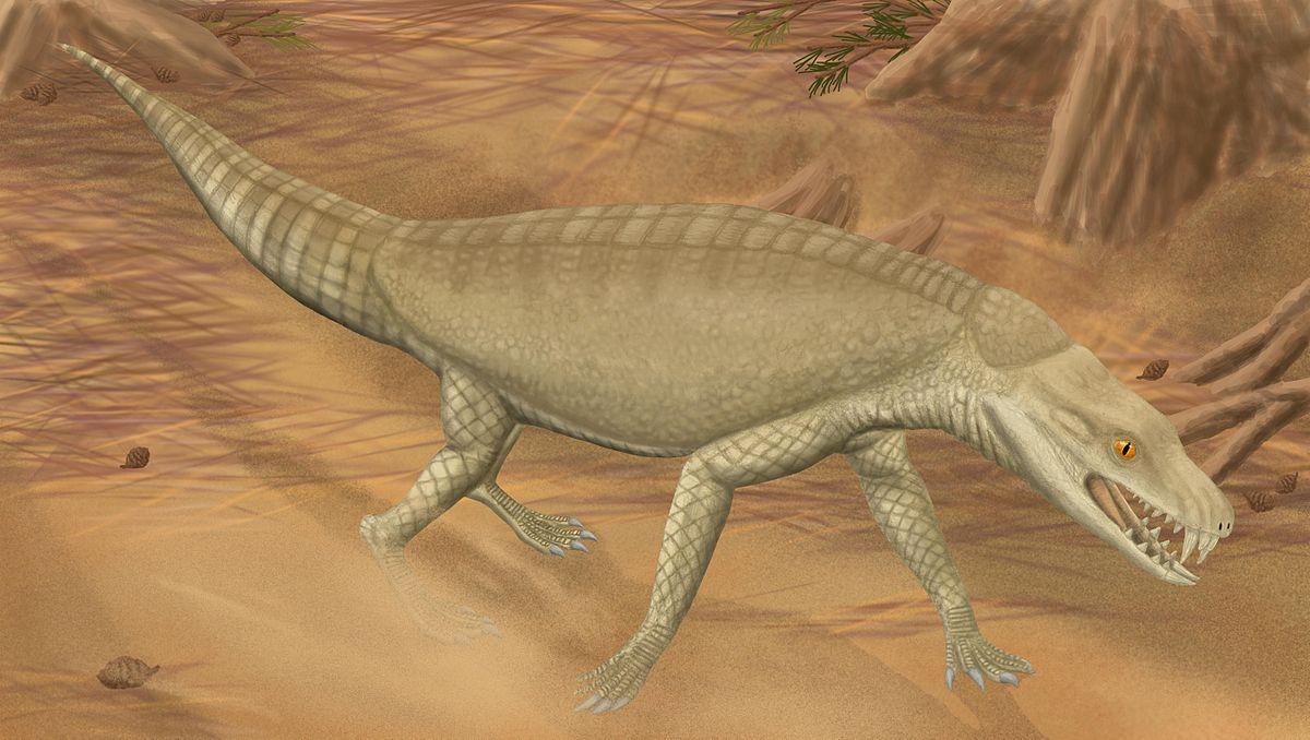 Armadillosuchus - Wikipedia