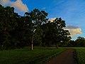 Ash Trees in Warner Park - panoramio.jpg