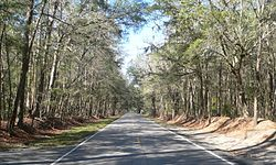 Ashley River Road 1.8 mi N of Bees Ferry Rd.JPG