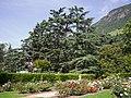 Atlas Zeder Himalaya Zeder in der Fagenstrasse Bozen.jpg