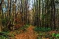 Autumn Forest (180309025).jpeg