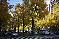 Autumn in Mido-suji Osaka03n.jpg