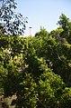 Balboa Park, San Diego, CA, USA - panoramio (102).jpg