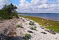 Baltic coast near Suuresadama, July 2009.jpg