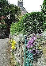 Bank Street, Doune. Spring flowers cover a garden wall in the village of Doune.