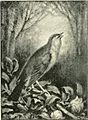 Bards and the birds; (1894) (14563868139).jpg
