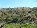 Barranca verde - panoramio (1).jpg
