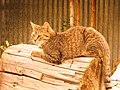Bart Cat.jpg