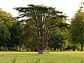 Beautiful Tree on the Westonbirt Estate - geograph.org.uk - 69666.jpg