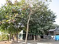 Beautiful farm house Photo By Raju Odedra Mo.07698787895 - panoramio.jpg