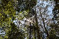 Beech Forest (AU), Great Otway National Park -- 2019 -- 1301.jpg