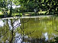 Beeston Priory Pond 3 August 2014.JPG