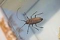 Beetle (39851356222).jpg