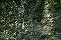 Belm Vehrte - Schwarzkreide 06 ies.jpg