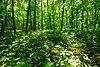 Belmont Mound Woods.jpg