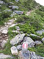 Bergpad (Smalzgrubenscharte).jpg