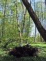 Bezhitskiy rayon, Bryansk, Bryanskaya oblast', Russia - panoramio (160).jpg