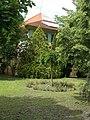 Bibó István gimnázium, kert, középső rész, 2019 Kiskunhalas.jpg