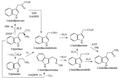 Biosíntesis de auxinoides.png