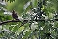 Bird (4855075733).jpg