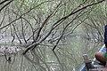 Bird Safari in Sunderbans (26552440859).jpg