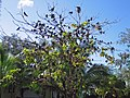 Bird Tree - Flickr - GregTheBusker.jpg