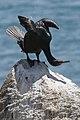Bird with fishing line.jpg