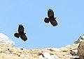 Birds 3432 (39363437952).jpg