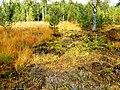Birkensee - panoramio (1).jpg