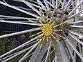 Birmingham Big Wheel and Winter Skate - Centenary Square (10910468046).jpg