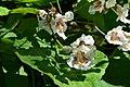 Blütenschatten.jpg