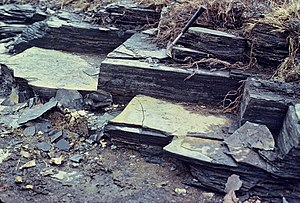 Euxinia - Black shale is one of the preliminary indicators of anoxia and perhaps euxinia