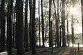 Black worrior river UA.jpg