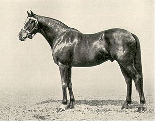 Blandford (horse) Irish-bred Thoroughbred racehorse