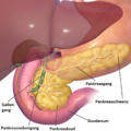 Blausen 0698 PancreasAnatomy deutsch.png