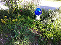 Blue Gazing Ball in Home Garden.jpg