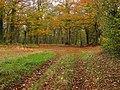 Bodkin Hazel Wood. - geograph.org.uk - 1761761.jpg