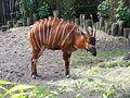 Bongo - Burgers Zoo.JPG