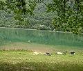 Boračko jezero - panoramio.jpg